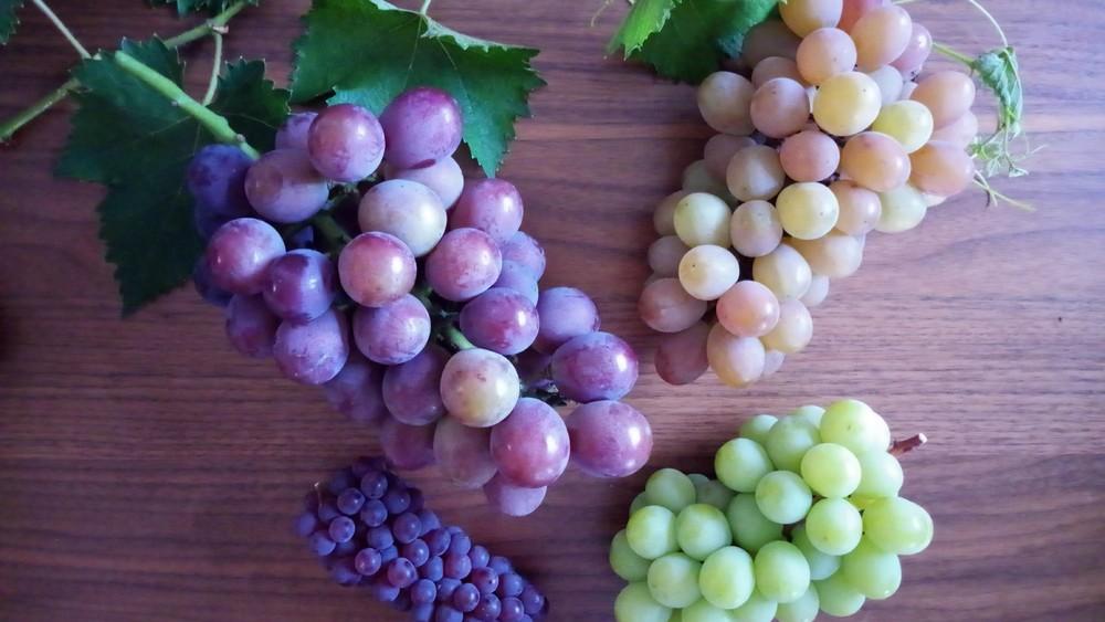 ブドウはどの部分が甘い粒?追熟する?糖度実験してみた