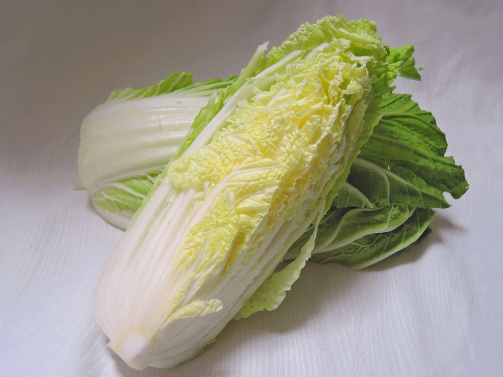 白菜 <野菜オタク> 野菜辞典 vol.10