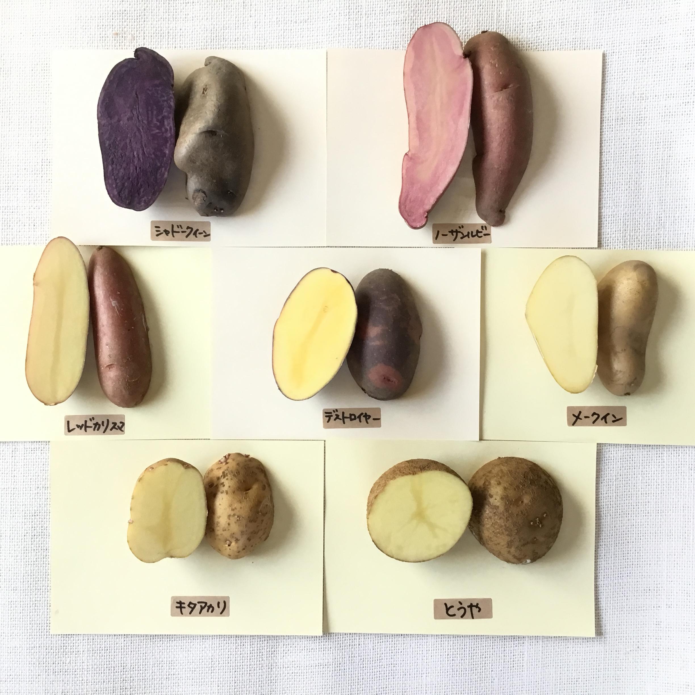 片栗粉を作ってジャガイモでんぷん量の比較実験をしてみた!