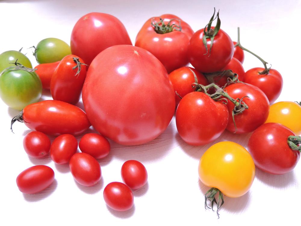 トマト <野菜オタク> 野菜辞典 vol.17