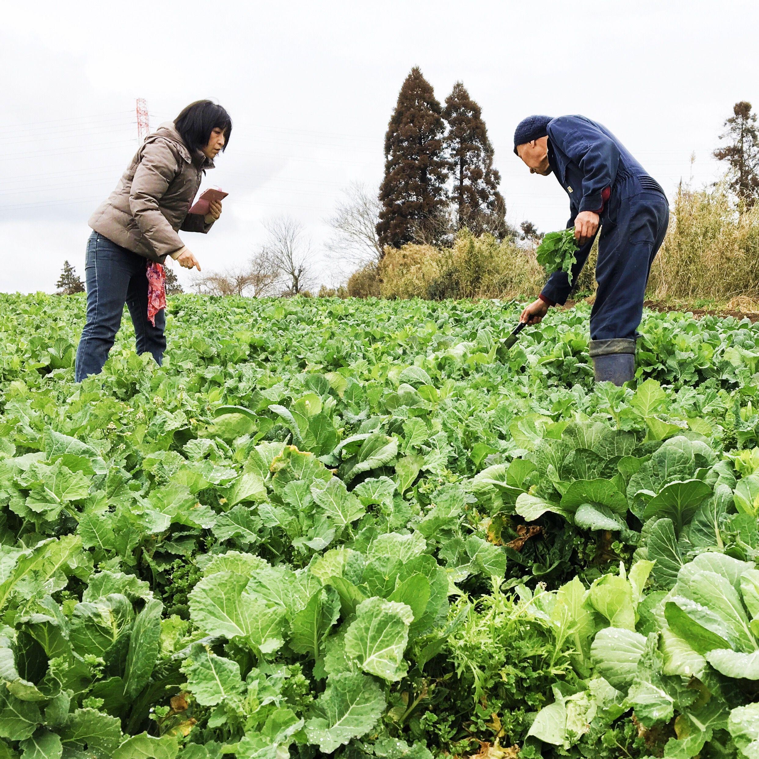 菜花が自生?!…いざ、斎藤農園へ