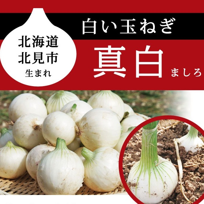 北海道産地の子どもたちによる白タマネギ「真白」PR販売実施!