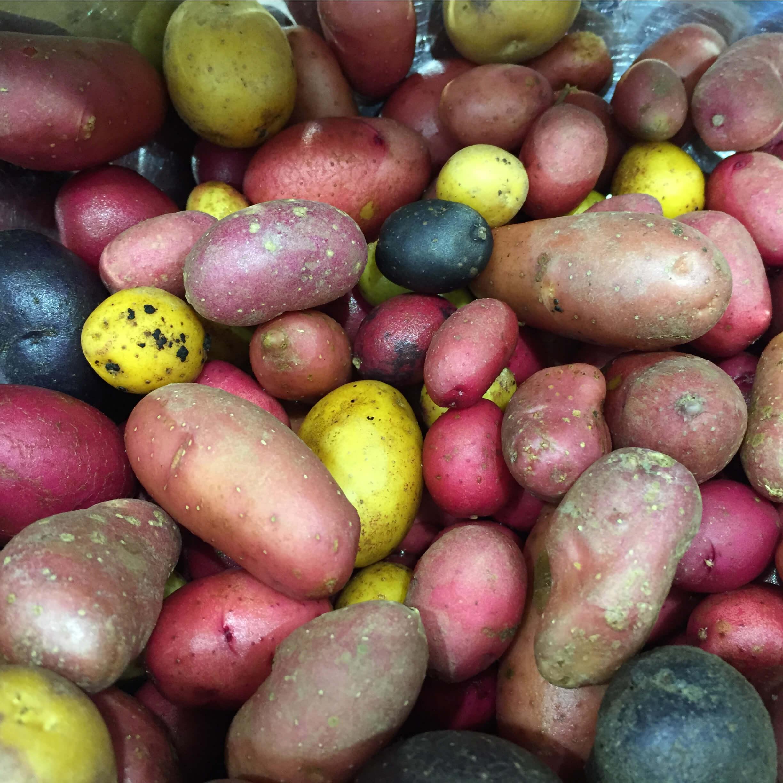ジャガイモを育ててみよう!プランター・袋でも栽培できるってホ…