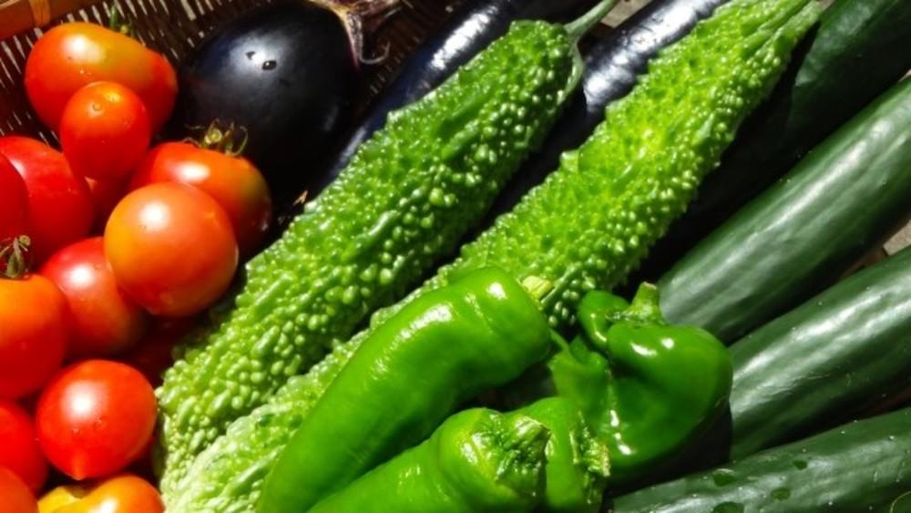 【夏休み自由研究課題】テーマ一覧~今年は野菜実験に挑戦しよう…
