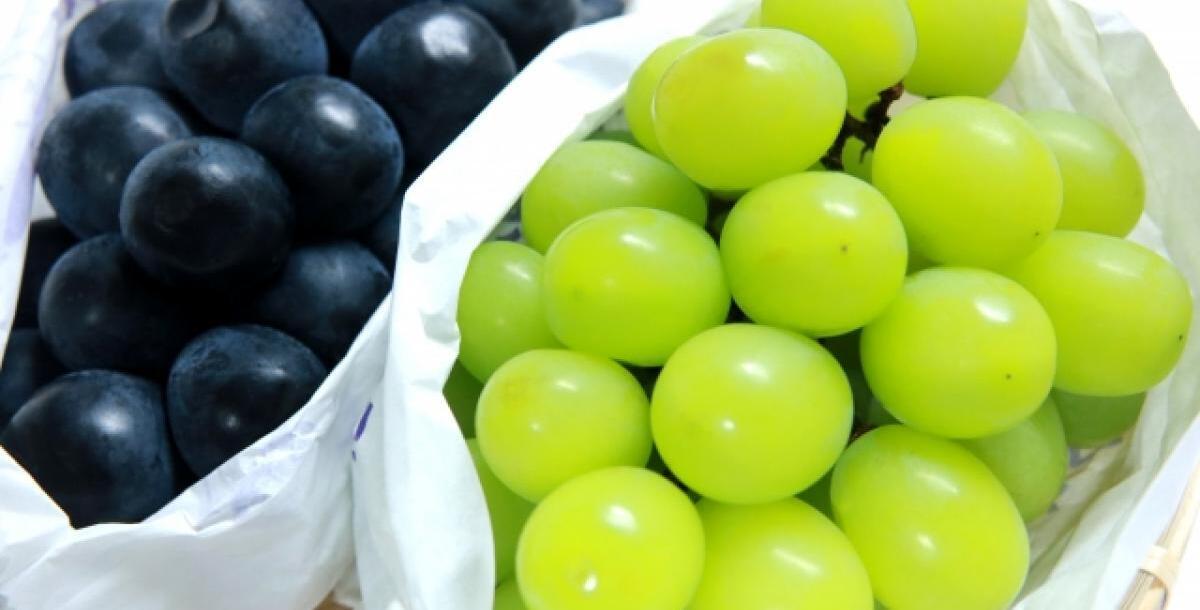 【おかやま応援隊】銀座三越でブドウ小袋配布とPR…