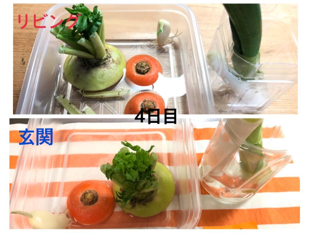リボベジ♪子どもと一緒に野菜の切れはしを育ててみよう